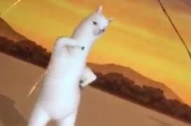 アルパカが英語のリスニングで踊るツイートのアプリは何?動画を紹介!